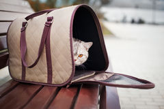Cat in pet carrier. On a park bench Stock Photography