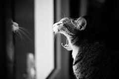 Cat. Pet cats in the house Royalty Free Stock Images