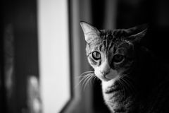 Cat. Pet cats in the house Stock Photo