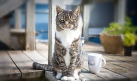 A cat. A pet cat with a cup of a tea Royalty Free Stock Photos