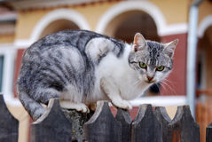 Cat (pet) on fence Stock Photos
