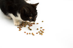 Cat and pet food. On withe background stock image