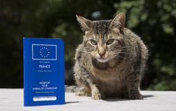 Cat with Pet Passport Stock Photography