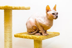Cat pet shop stand Stock Photography