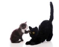 Cat-Petting Kitty Stock Photo