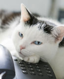 Cat on the phone! Royalty Free Stock Image