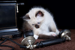 Cat on the phone Stock Photography