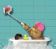 Cat with phone in bathroom 2 royalty free stock photos