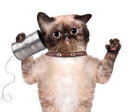 Cat on the phone with a can Royalty Free Stock Image