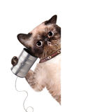 Cat on the phone with a can Stock Photos