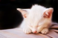 Cat photo - Angelic sleep 2 - Black background Stock Photos