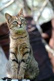 Cat photo. Beautiful domestic pet feral cat Stock Images