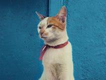 CAT PHOTO royalty free stock image