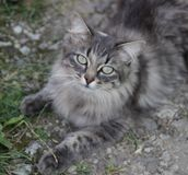 Cat. The photo of lovely cat royalty free stock image