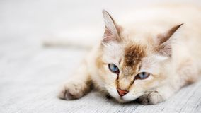 Cat photo - Restless Royalty Free Stock Photo