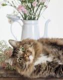 Cat Photobomb Still Life Set Fotos de archivo libres de regalías