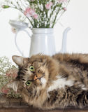 Cat Photobomb Still Life Set Royalty Free Stock Photos