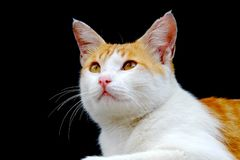 Cat photographed from the side. Looking forward with calm and relax face Stock Photo