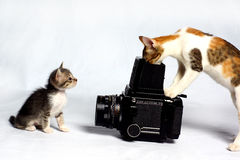 Cat photographer Stock Images