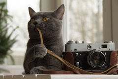 Cat photographer or fine-tuning Stock Image