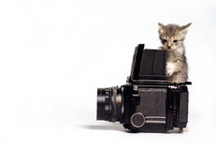 Cat photographer Stock Photos