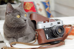 Cat photographer or waiting for better shot Royalty Free Stock Images
