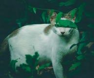 Cat Photography Royalty-vrije Stock Fotografie