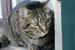 Cat Photography Royaltyfri Foto