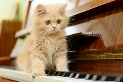 Cat and piano Stock Photos