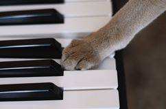 Cat and piano. Piano keys and cat`s paw Royalty Free Stock Images