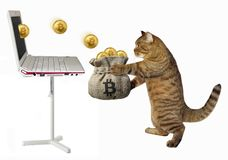 Cat picks bitcoins in a bag. The cat puts the bitcoins into a sack which pops up from the laptop. White background stock images