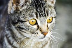 Cat pictures,cute cat pictures,cat`s eye,the most beautiful cat eyes Stock Images