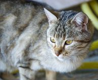 Cat pictures,cute cat pictures,cat`s eye,the most beautiful cat eyes Stock Photos