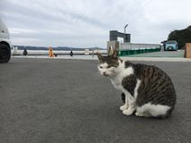 Cat at a pier Royalty Free Stock Image