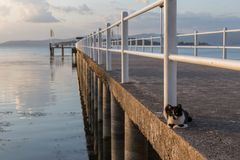 A cat on a pier on a lake with warm sunset colors. A cat resting on a pier on a lake with warm sunset colors Stock Photography
