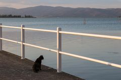 A cat on pier looking at water. A cat on a pier looking at water Royalty Free Stock Photos
