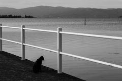 A cat on pier. Looking at water Stock Image