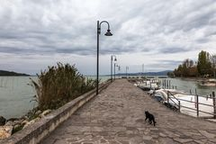 A cat on a pier on Trasimeno lake Umbria, with some docked boats and beneath an overcast sky. A cat on a pier on Trasimeno lake Umbria with some docked boats and Stock Image