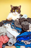 Cat on pile of clothes Stock Images