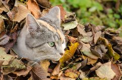 Cat at a pile of leaves stock images