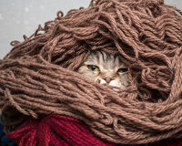 Cat in a pile thread woolen yarn Royalty Free Stock Photography