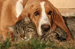 Cat pillow, dog blanket II. Stock Image