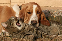 Cat pillow, dog blanket III. Stock Images