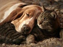 Cat pillow, dog blanket royalty free stock photo