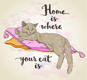 Cat on pillow and lettering. Vector background with cat on pillow and lettering Royalty Free Stock Photos
