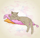 Cat on pillow. Vector background with cat on pillow Stock Photography