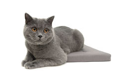 Cat on a pillow  on white background Royalty Free Stock Photo