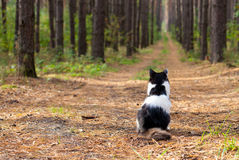 Cat in the pinewood. Cat sitting on a footpath in a pine forest royalty free stock photos