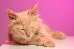The cat on pink background Royalty Free Stock Photo