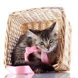 The cat with a pink bow hides in a wattled basket. Stock Photos